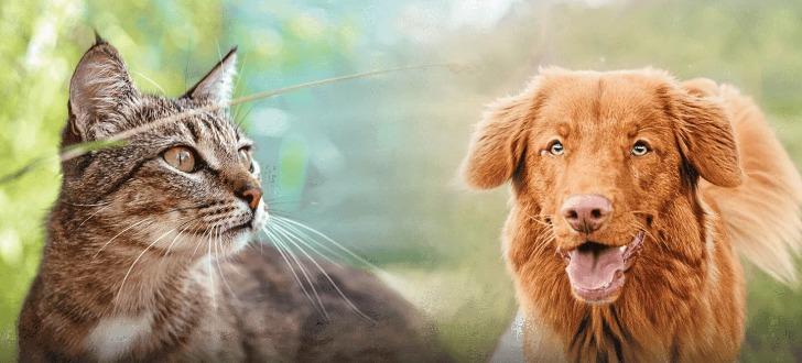 Nutro Hunde- und Katzenfutter testen
